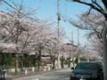 [その他]関西学院大学前の桜 2010.4.4 (2)