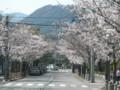 [その他]関西学院大学前の桜 2010.4.4 (3)