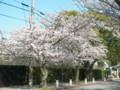 [その他]関西学院大学前の桜 2010.4.4 (5)