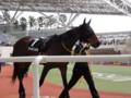[馬]ラフォルジュルネ 忘れな草賞5着 2010.4.11