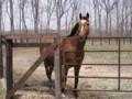 [馬]カンパニー 社台スタリオンS 2010.5.3