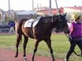[馬]キタサンオリオン イーバンクから楽天銀行賞 2010.5.4
