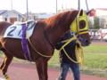 [馬]ワールドプレミア イーバンクから楽天銀行賞 2010.5.4
