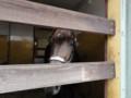 [馬]マイネシャローナの09 牡 父ロージズインメイ CVF