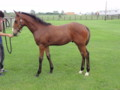 [馬]アドアードの10 牡 父Duke of Marmalade 白老F