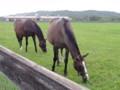 [馬]レクレドール(手前)とリトルハーモニー(奥)