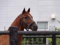 [馬]ミホノブルボン 函館競馬場 (1)