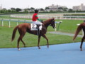 [馬]マイネヴィント 500万下10着 2010.8.8