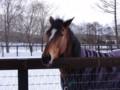 [種牡馬]ハービンジャー 社台スタリオンS 2011.1.7 (1)