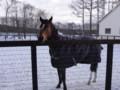 [種牡馬]ハービンジャー 社台スタリオンS 2011.1.7 (2)