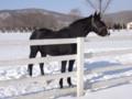 [種牡馬]ロージズインメイ ぐいっぽ中 BRF明和 2011.1.8
