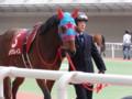 [馬]モアグレイス フィリーズレビュー15着 (1)