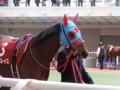 [馬]モアグレイス フィリーズレビュー15着 (2)