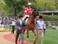 [馬]レッドデセーオ 未勝利戦4着 (2)