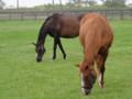 [馬]オリエンタルアート&リトルハーモニー