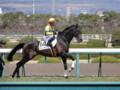 [馬]ブランクヴァース 未勝利戦2着 (2)