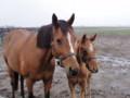 アルーリングボイスと当歳 牝 父キングカメハメハ