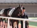 ケイティープライド 新馬優勝 (1)
