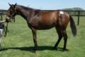 [出資馬]グレースランドの12 牝 父ゼンノロブロイ