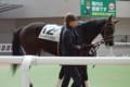 [出資馬]シードオブハピネス 新馬戦2着 (1)