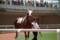 セドゥラマジー 新馬戦9着 (1)