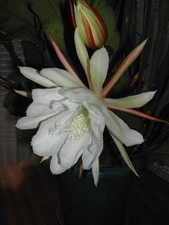 f:id:kokuriko-fufu:20080613211239j:image