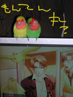 f:id:kokuriko-fufu:20080709202355j:image