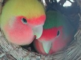 f:id:kokuriko-fufu:20080709235817j:image