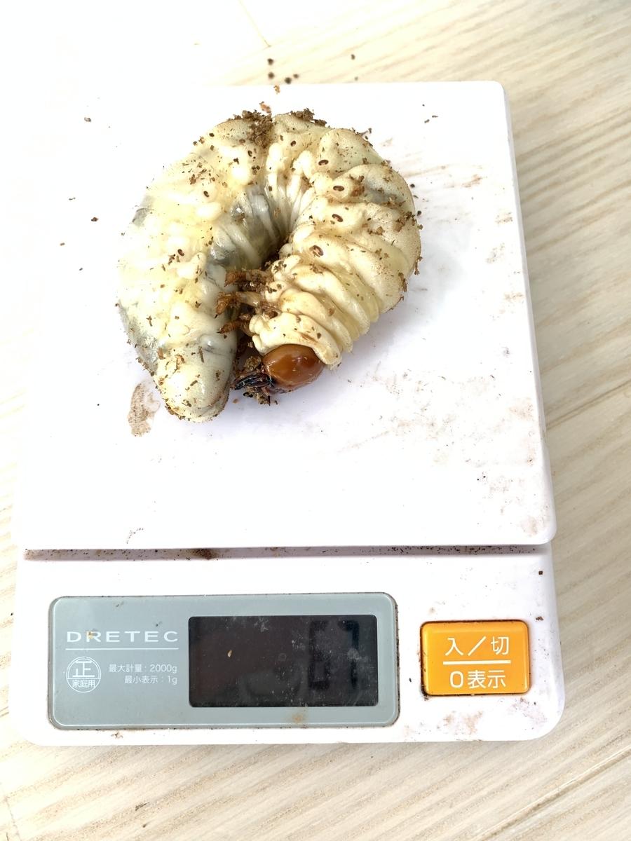 f:id:koma-musume-kabutomushi:20190819221610j:plain