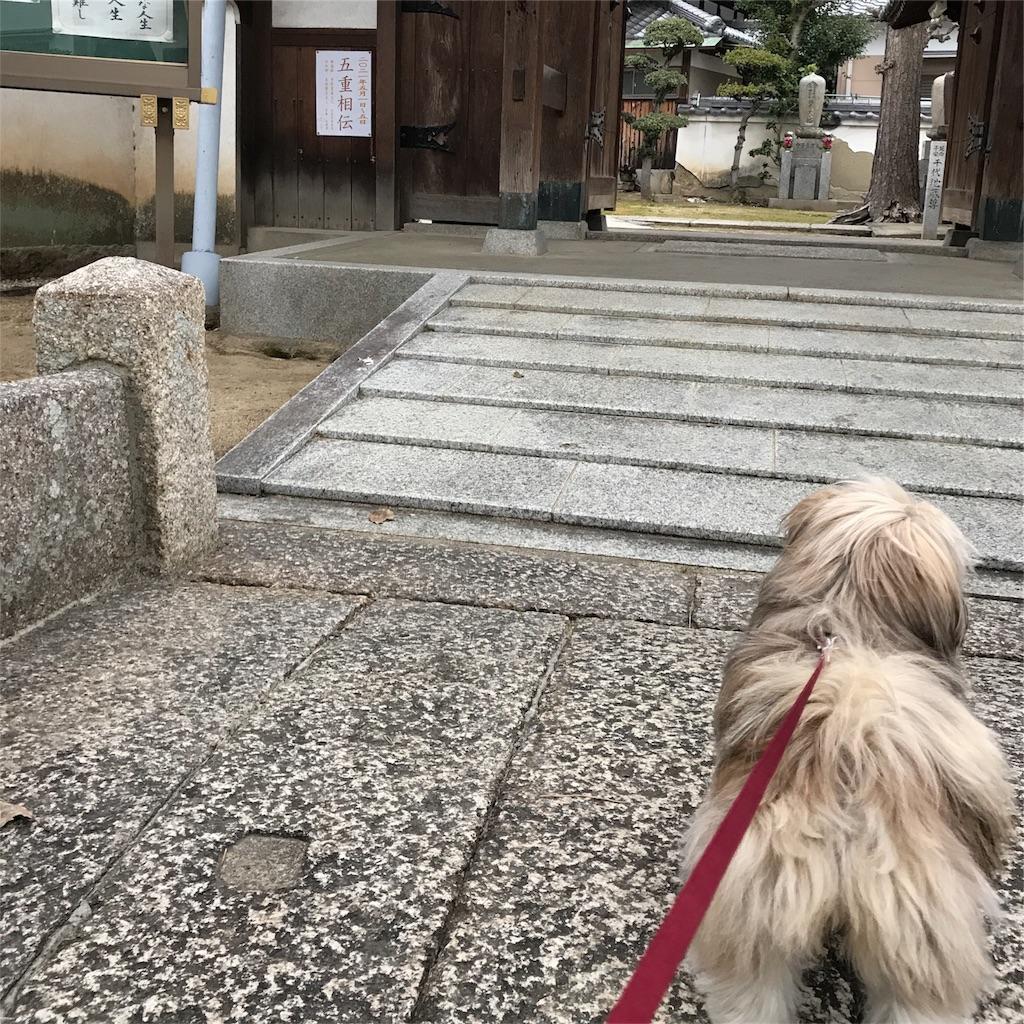 f:id:komachibiyori:20190314140955j:image