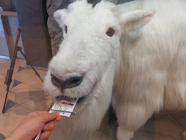 江戸川競艇場のハズレ舟券を食べるマッシロー