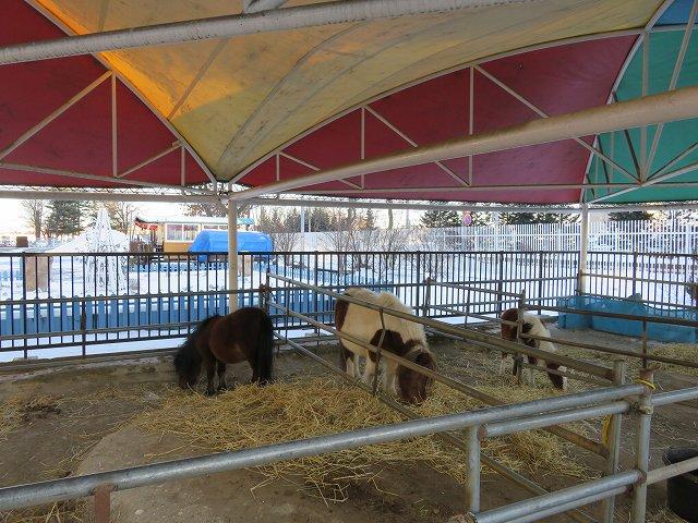 ばんえい帯広競馬場の「ふれあい動物園」