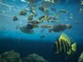 葛西臨海水族館11