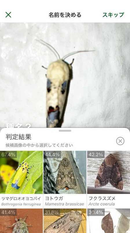 Biomeの虫の名前の判定結果の表示画面