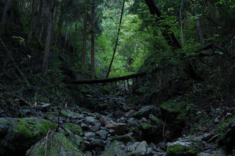 日暮れる森