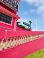 タモン散歩中に見つけた噂のピンクの壁