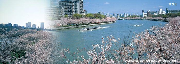 桜の宮公園の桜