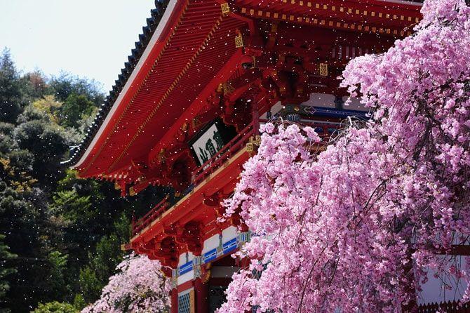 勝尾寺の桜