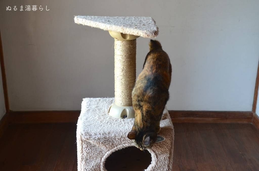 cat-tower1