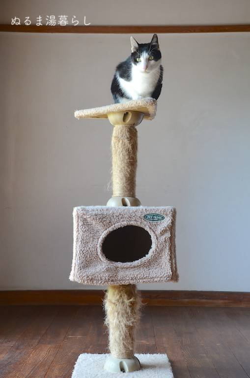 cat-tower2