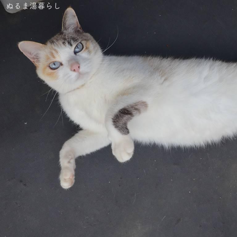 cat-collar2