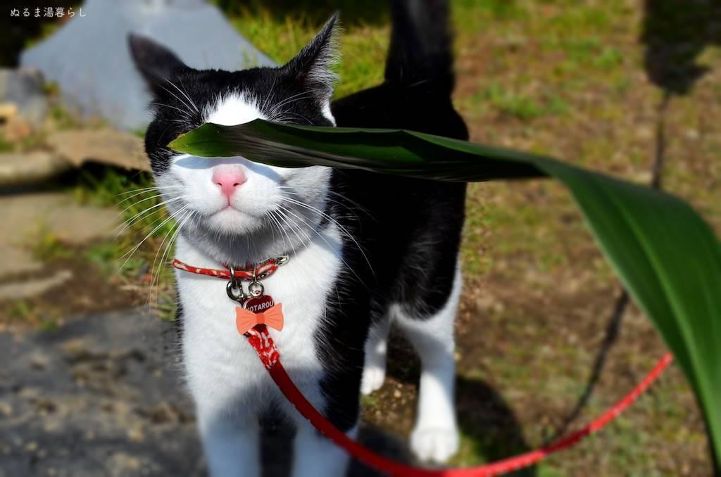 cat-collar3