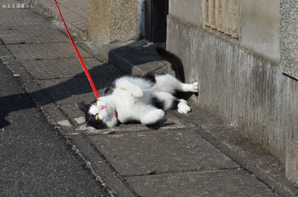 cat-collar4