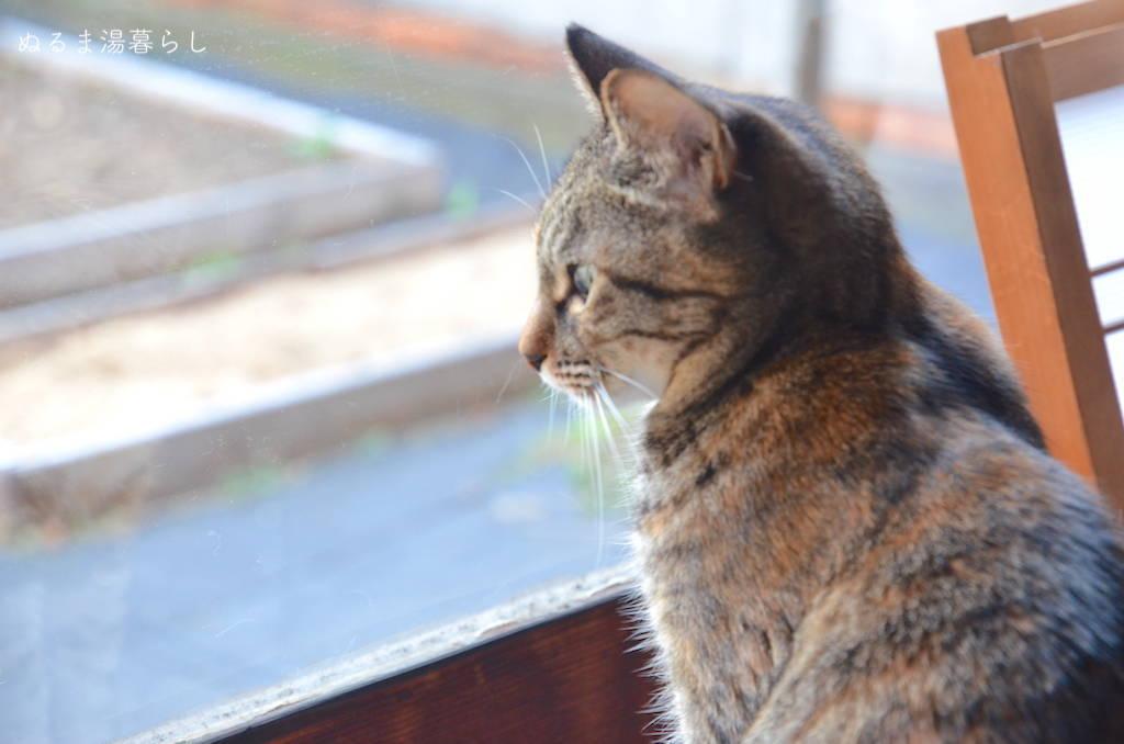 cat-collar5
