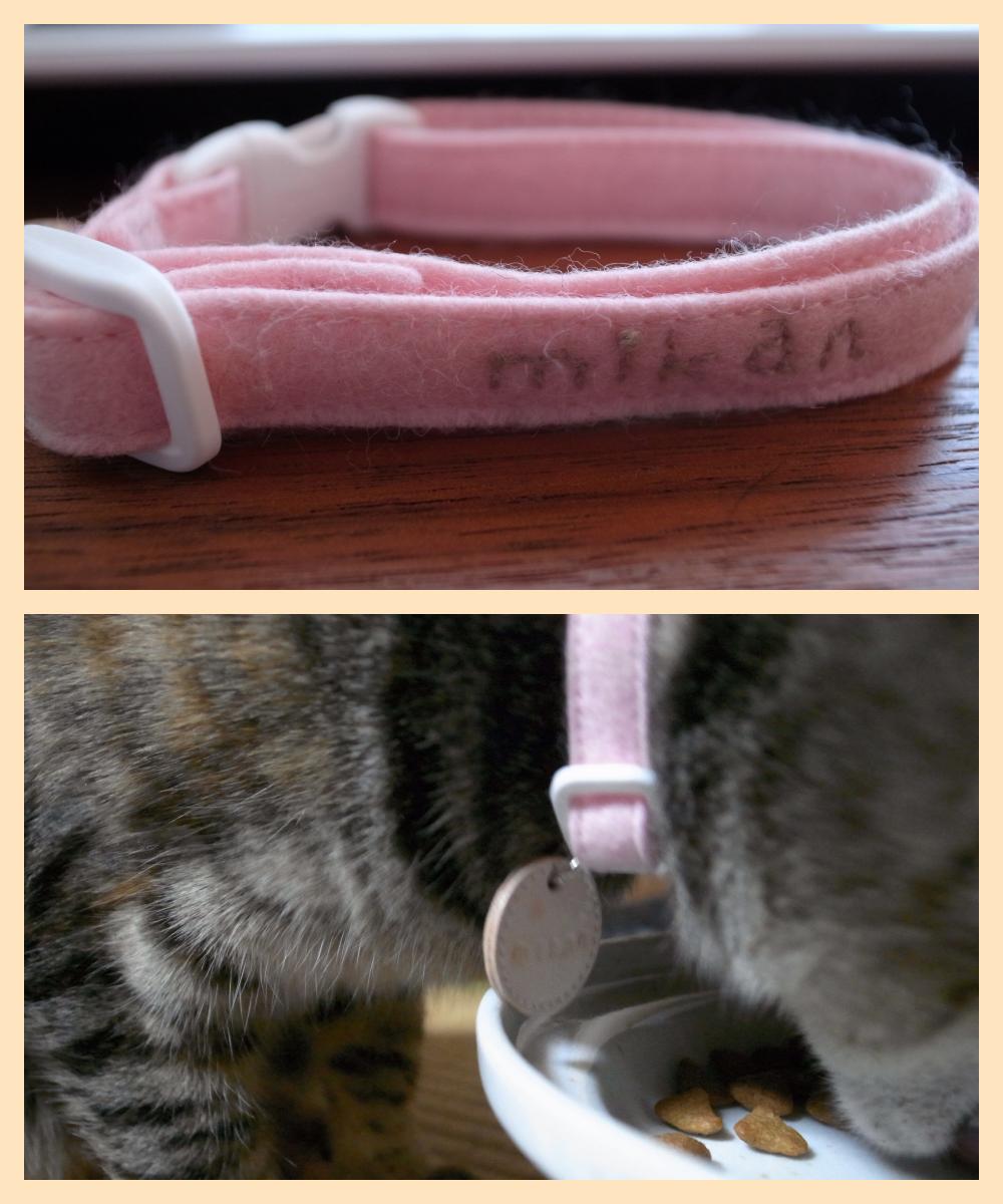 cat-collar7