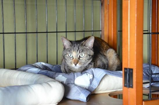 cat-summer-bedding4