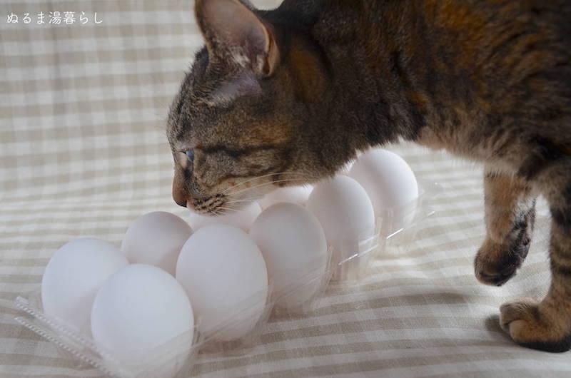 egg-storage