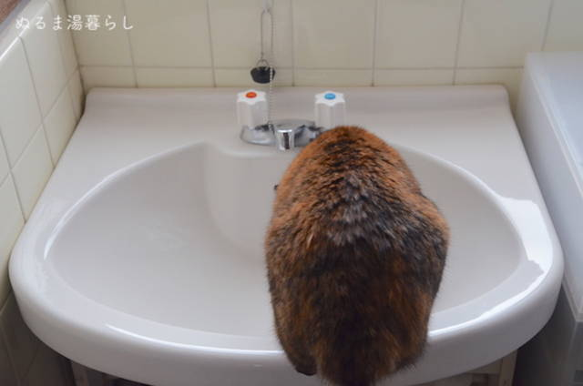 Wash-basin-cleaning3