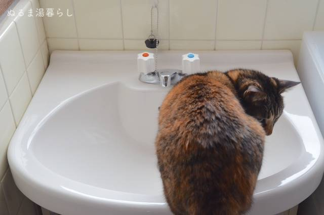 Wash-basin-cleaning4