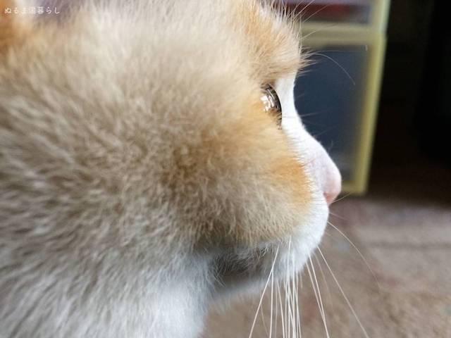 cat-hiiragi4